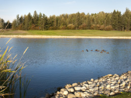 Water hazard with ducks at Lewis Estates Golf Course
