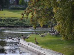 Natural wildlife at Lewis Estates Golf Course